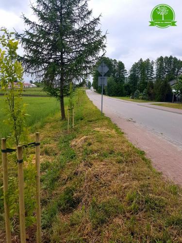 nasadzenia drzew